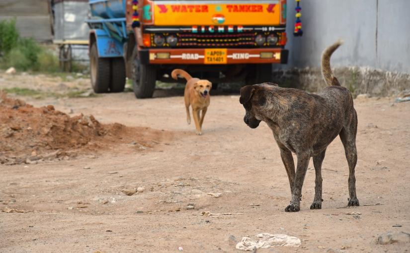 Streetdogs 2.0